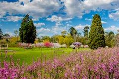 Ο κήπος ροδάκινων Στοκ Εικόνες