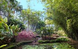 Ο κήπος της βαλάτας, νησί της Μαρτινίκα, γαλλικές Δυτικές Ινδίες στοκ εικόνες