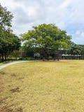 Ο κήπος τομέων χλόης μουσείων τσαγιού Osulloc υπαίθριος με το δέντρο και Στοκ εικόνα με δικαίωμα ελεύθερης χρήσης