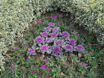 Ο κήπος του κατσαρού λάχανου Στοκ Φωτογραφίες