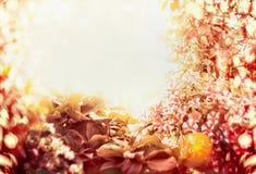 Ο κήπος φθινοπώρου στο ηλιόλουστο υπόβαθρο, πλαίσιο, θόλωσε το υπόβαθρο φύσης με το bokeh Στοκ Εικόνες