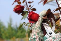 ο κήπος φορά γάντια στο χέρ&iota Στοκ φωτογραφίες με δικαίωμα ελεύθερης χρήσης