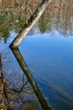 Ο καθρέφτης όπως το νερό απεικονίζει τα δέντρα σε ένα πάρκο Στοκ Εικόνες