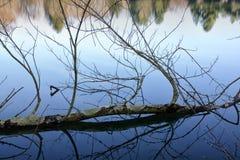Ο καθρέφτης όπως το νερό απεικονίζει τα δέντρα σε ένα πάρκο Στοκ Φωτογραφία