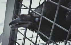 Ο κακός τύπος σε ένα κλουβί Στοκ Εικόνα