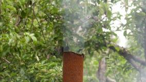 Ο καπνός από το σκουριασμένο σωλήνα μετάλλων στο υπόβαθρο των δέντρων της Apple απόθεμα βίντεο
