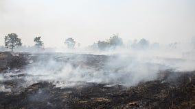 Ο καπνός και οι φλόγες εμφανίζονται από το καίγοντας άχυρο ρυζιού καλαμιών γεωπόνων απόθεμα βίντεο