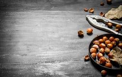 Ο καρυοθραύστης με τα φουντούκια και τα ξηρά φύλλα Στοκ φωτογραφία με δικαίωμα ελεύθερης χρήσης
