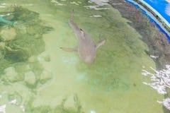 Ο καρχαρίας κολυμπά στο ενυδρείο επάνω από την όψη στοκ εικόνες