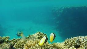 Ο καταπληκτικός υποβρύχιος κόσμος - κρύσταλλο - καθαρίζει το νερό με τις ακτίνες ήλιων και τα κοράλλια με τα εξωτικά ψάρια Σύνθεσ φιλμ μικρού μήκους