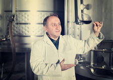 Ο κατασκευαστής κρασιού ελέγχει την ποιότητα του κρασιού Στοκ φωτογραφία με δικαίωμα ελεύθερης χρήσης