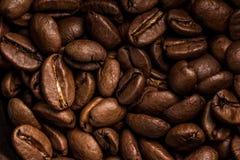 ο καφές που έρχεται αφήνει έξω το μίσχο σπόρων φυτών Στοκ Φωτογραφίες
