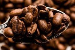 ο καφές που έρχεται αφήνει έξω το μίσχο σπόρων φυτών Στοκ εικόνες με δικαίωμα ελεύθερης χρήσης