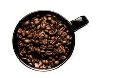 ο καφές που έρχεται αφήνει έξω το μίσχο σπόρων φυτών Στοκ φωτογραφίες με δικαίωμα ελεύθερης χρήσης