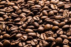 ο καφές που έρχεται αφήνει έξω το μίσχο σπόρων φυτών Στοκ εικόνα με δικαίωμα ελεύθερης χρήσης