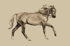 Ο καλπασμός του αλόγου (εκλεκτής ποιότητας σχέδιο) Στοκ Φωτογραφίες