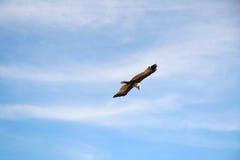 Ο καλύτερος κυνηγός στον ουρανό Στοκ φωτογραφία με δικαίωμα ελεύθερης χρήσης