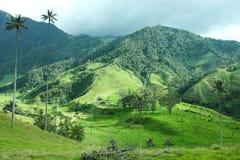 ο κεντρικός να αναπτύξει οροσειρών της Κολομβίας καφέ cocora διάσημος εθνικός φοίνικας βουνών τοπίων μεγαλοπρεπής υπερισχύει κερί στοκ εικόνες
