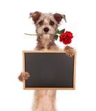 Ο κενός πίνακας κιμωλίας εκμετάλλευσης σκυλιών μιγμάτων τεριέ με αυξήθηκε στο στόμα Στοκ Εικόνες