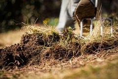 Ο κηπουρός αερίζει το χώμα και σκάβει επάνω το έδαφος κήπων με ένα σκάψιμο στοκ εικόνα με δικαίωμα ελεύθερης χρήσης