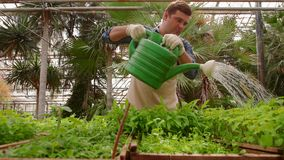 Ο κηπουρός ατόμων εργάζεται στον κήπο, τα πράσινα σπορόφυτα ποτίσματος με το πότισμα μπορούν απόθεμα βίντεο