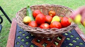 Ο κηπουρός βάζει τα πρόσφατα συγκομισμένα λαχανικά και τα φρούτα στο καλάθι σε ένα αγρόκτημα απόθεμα βίντεο