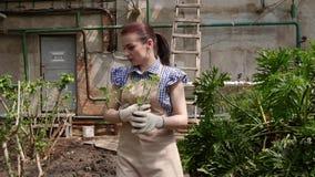 Ο κηπουρός γυναικών περπατά στο θερμοκήπιο με τα σπορόφυτα στα handds και επιλέγει μια θέση για να τους φυτεψει απόθεμα βίντεο