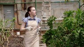 Ο κηπουρός γυναικών περπατά στο θερμοκήπιο που ικανοποιεί με την εργασία της και αναβάλλει τα γάντια της απόθεμα βίντεο