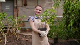 Ο κηπουρός γυναικών στο θερμοκήπιο κρατά το δοχείο με τις εγκαταστάσεις στα χέρια που φαίνονται κεκλεισμένων των θυρών και που χα φιλμ μικρού μήκους