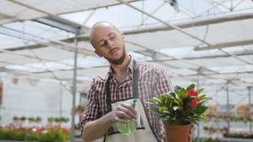 Ο κηπουρός νεαρών άνδρων που φορά την ποδιά ποτίζει το φυτό γλαστρών και ελέγχει τα φύλλα εργαζόμενος μέσα στο θερμοκήπιο επάγγελ απόθεμα βίντεο