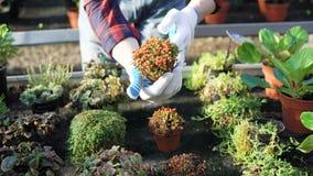 Ο κηπουρός παρουσιάζει διαφορετικούς θάμνους στο gardenhouse 4K απόθεμα βίντεο