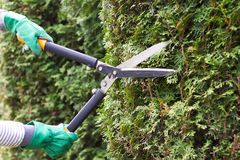 Ο κηπουρός τακτοποιεί έναν φράκτη Στοκ εικόνα με δικαίωμα ελεύθερης χρήσης