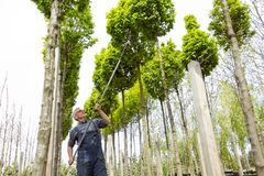 Ο κηπουρός φροντίζει τα νέα δέντρα στοκ εικόνες