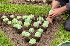 Ο κηπουρός φυτεύει τα λουλούδια την άνοιξη στοκ εικόνες