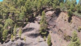 Ο κηφήνας αυξάνεται επάνω - μια αιώνας-παλαιά περικοπή βράχου και ένα κωνοφόρο δάσος απόθεμα βίντεο