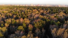 Ο κηφήνας πετά πέρα από τη δασική άποψη άνωθεν Φθινόπωρο, πεσμένα φύλλα απόθεμα βίντεο