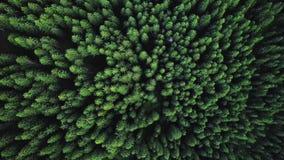 Ο κηφήνας πετά τα πράσινα πέρα από τα δέντρα απόθεμα βίντεο