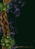 ο κισσός πλαισίων νεράιδ&omega απεικόνιση αποθεμάτων