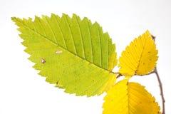 ο κλάδος βγάζει φύλλα μι&ka Στοκ φωτογραφία με δικαίωμα ελεύθερης χρήσης