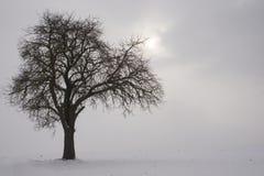 ο κλάδος καταλαμβάνει τον ήλιο Στοκ Εικόνες