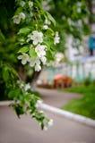 Ο κλάδος των λουλουδιών μήλων με παιδιά ` s κατοικεί στο υπόβαθρο Στοκ Εικόνα