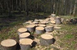 Ο κορμός δέντρων κόβεται στις γκοφρέτες Στοκ εικόνα με δικαίωμα ελεύθερης χρήσης