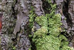 Ο κορμός δέντρων καλύπτεται με το πράσινο βρύο στοκ εικόνα