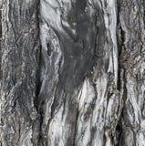 Ο κορμός ενός δέντρου στοκ φωτογραφίες