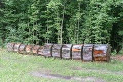 Ο κορμός ενός μεγάλου δέντρου κόβεται στα κομμάτια και βρίσκεται στο έδαφος στοκ φωτογραφίες με δικαίωμα ελεύθερης χρήσης