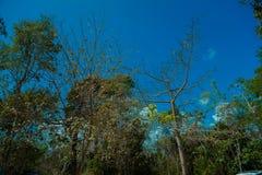 Ο κορμός ενός ξηρού δέντρου Στοκ Φωτογραφίες