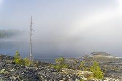 Ο κορμός ενός ξηρού πεύκου σε ένα κλίμα της παχιάς ομίχλης Karel Στοκ Εικόνες