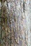 Ο κορμός και ο φλοιός ενός ενήλικου δέντρου της Apple ανασκόπηση κατασκευασμένη Στοκ Φωτογραφίες