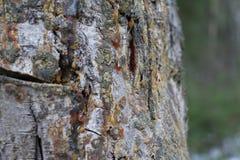 Ο κορμός του δέντρου Στοκ εικόνες με δικαίωμα ελεύθερης χρήσης