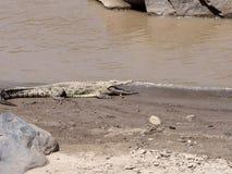 Ο κροκόδειλος του Νείλου, niloticus Crocodylus, βρίσκεται στις πτώσεις Awash, Αιθιοπία στοκ εικόνες